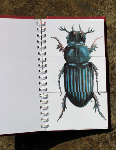 CCC book page, beetle