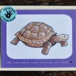 Tortoise of Love